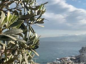 Blog 5_Rana_Sea View