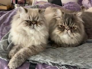 Blog 7 Ranas cats